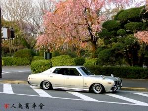 330-wp-sakura